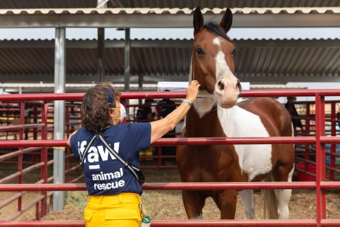 Praca zootechnika z końmi