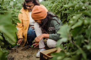 Praca na farmach z innymi